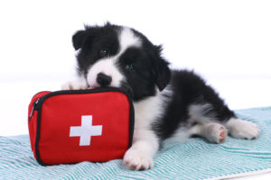 Pet first aid and the law