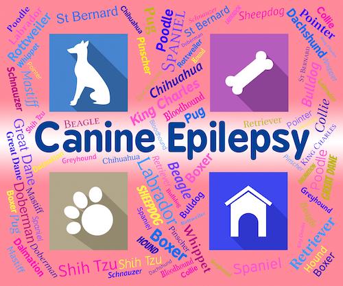 Pet Epilepsy